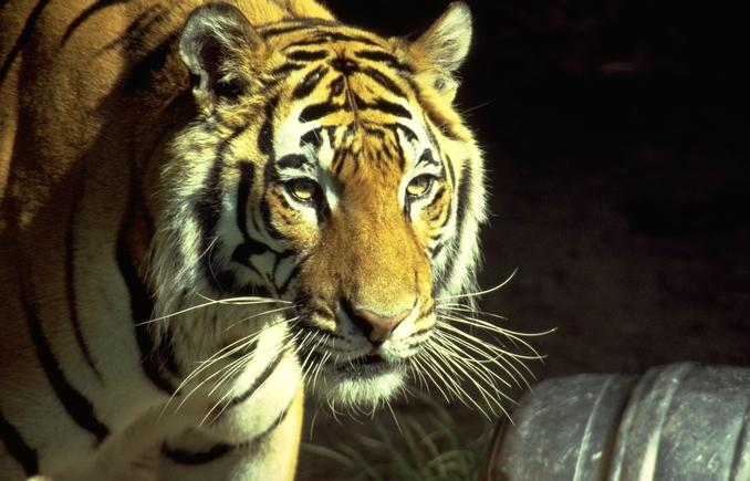 Blank Park Zoo Calendar : Jester park natural playscape des moines parent