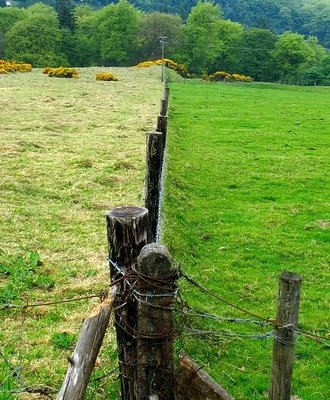 Grass Greener on Other Side of Fence