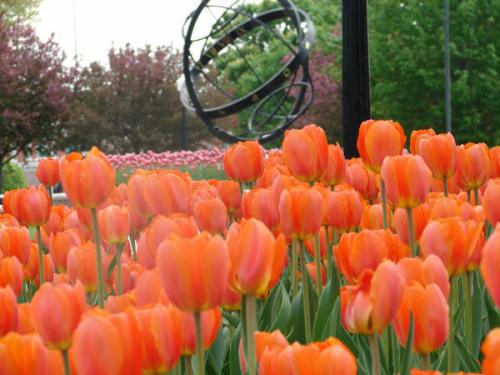 Pella Tulip Time