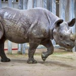 Blank Park Zoo – A Guide to Taking Young Kids