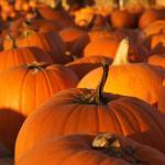 Howell's Pumpkin Patch