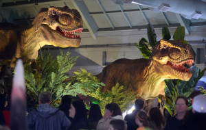 """People look at two animatronic Tyrannosaurus Rexs on display at the Jurassic Quest event held this weekend at the Alameda County Fairgrounds in Pleasanton, Calif., on Saturday, Feb. 8, 2014. The indoor exhibit features  life-size, realistic animatronic dinosaurs from the Jurassic, Triassic and Cretaceous periods. Visitors can interact with the dinosaurs and learn about them and even ride a few. There will be a T-Rex and Triceratops fossil digs where young paleontologists can uncover long hidden dinosaurs bones. Their is also a """"Dino Bounce"""" children's play area with several, towering, dinosaur theme inflatable mazes. (Doug Duran/Bay Area News Group)"""