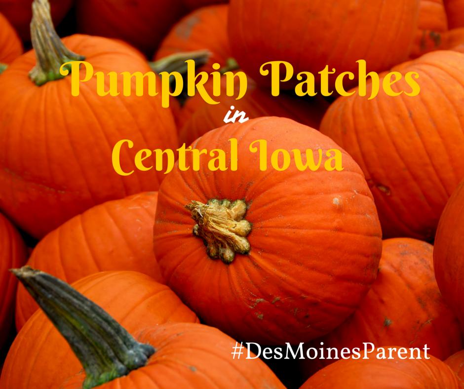 Pumpkin Patches-2