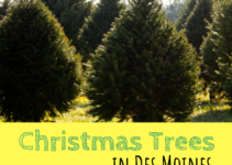 Christmas Trees, Des Moines