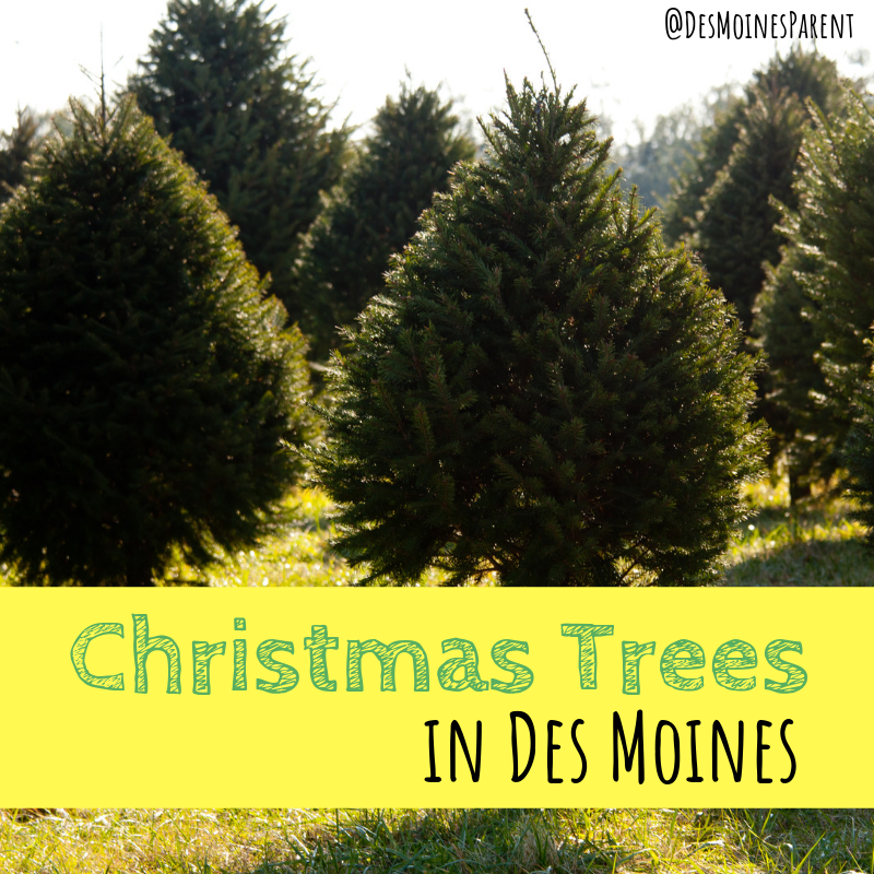 Christmas Trees in Des Moines