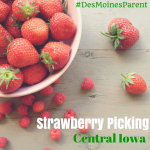 Strawberry Picking in Central Iowa