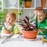 Des Moines Garden Centers, Des Moines, Iowa, garden centers, plants, flowers, succulents