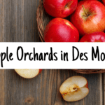 apple picking, apple orchards, Des Moines, Iowa