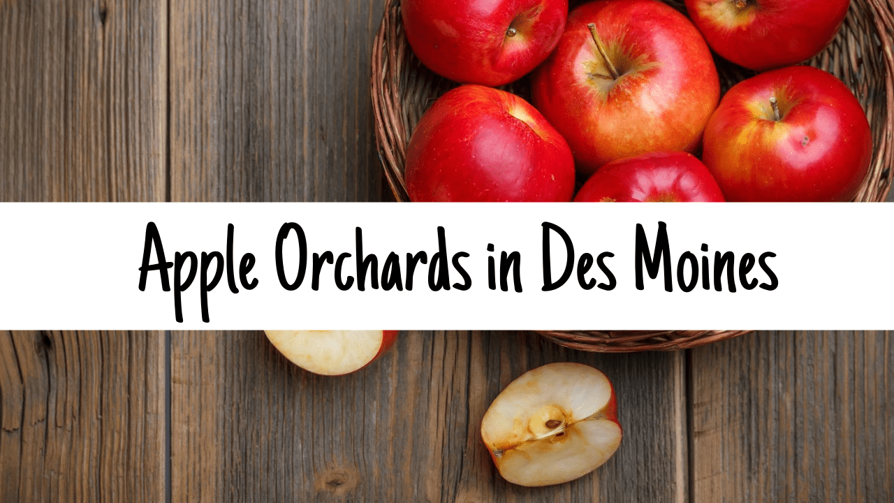 Apple Orchards in Des Moines