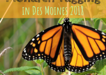 Monarch Tagging, Monarch, Des Moines