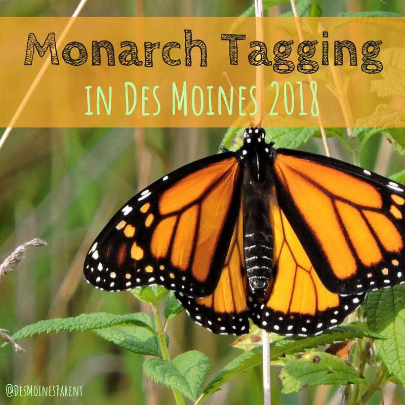 Monarch Tagging, Monarch, Des Moines