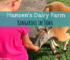 Hansen's Dairy Farm, Kangaroos, Iowa, Travel Iowa, Hudson, Cows