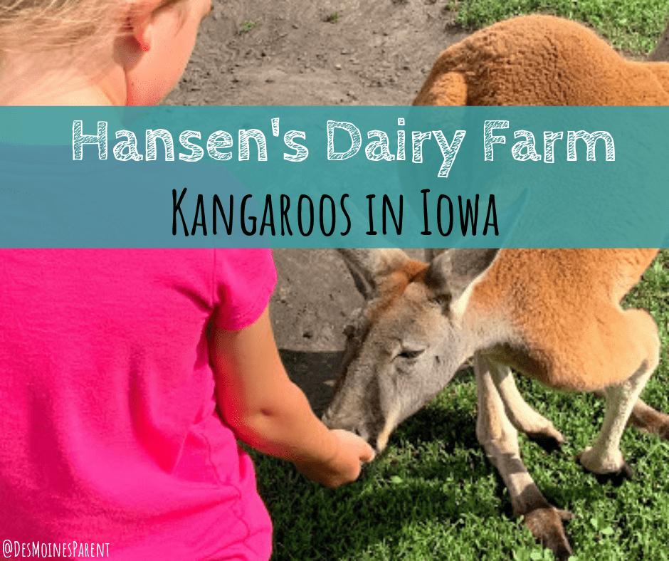 Hansen's Dairy Farm |  Kangaroos in Iowa