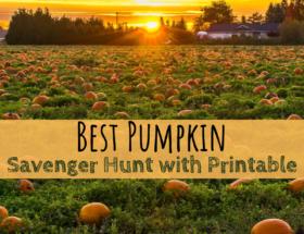 pumpkin, pumpkin patch, scavenger hunt