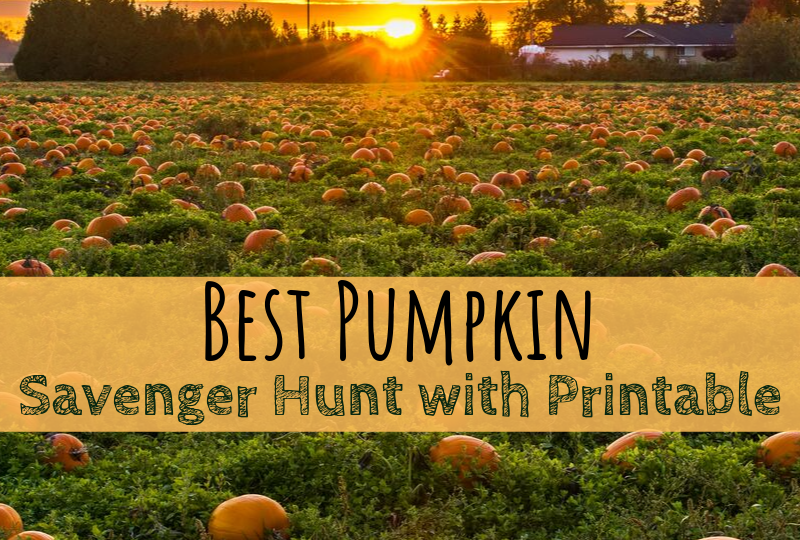 pumpkin, pumpkin patch, scavenger hunt