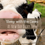 Sleep with the Cows in Iowa