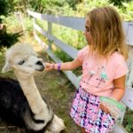 Fun Places to See Animals in the Des Moines Area