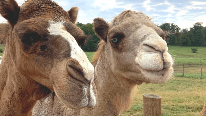 Animal Encounters at Wilstem Wildlife Park