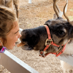 Reindeer Farm, Reindeer Ranch, Midwest, family travel, road trip, Illinois, Rantoul, Hardy's Reindeer Ranch