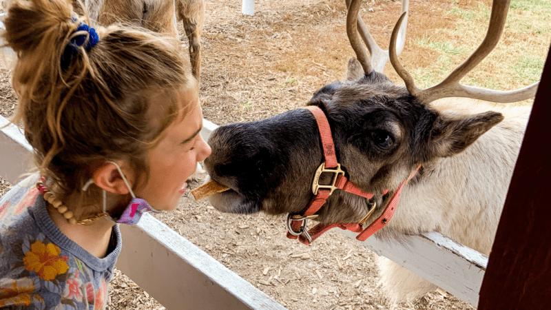 Midwest Reindeer | Hardy's Reindeer Ranch