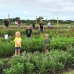 Pick your own flowers, Des Moines, Iowa, Willow Flower Farm, flower farm